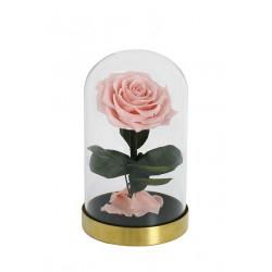 Rose éternelle sous cloche...