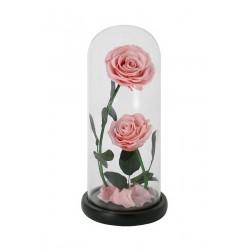 2 Roses éternelles sous...